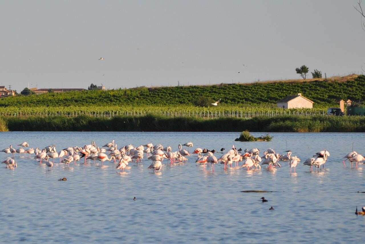 Photo of Laguna de Navaseca